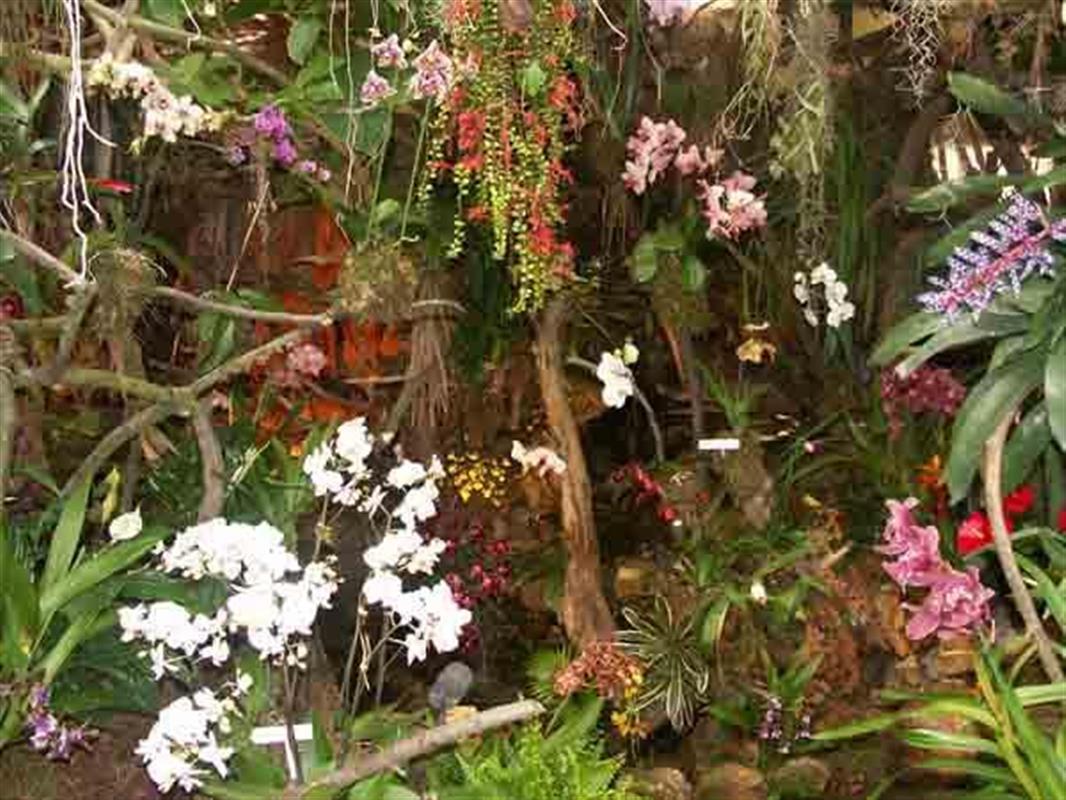 Video Serre aux Orchidees - Vidéos Parc animalier et jardin ...