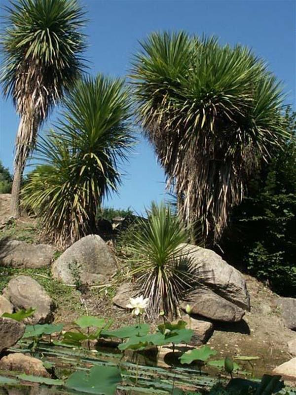 Jardin des plantes aquatiques bretagne les jardins du for Animalerie du jardin des plantes